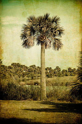 Old Florida Palm Poster