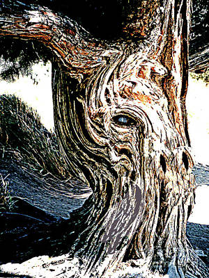 Poster featuring the digital art Old Juniper Mule Tree by Merton Allen