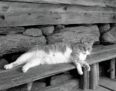 Poster featuring the photograph Old Mill Cat by Sandi OReilly