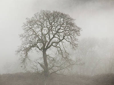 Poster featuring the photograph Old Oak Tree And Fog by Angie Vogel