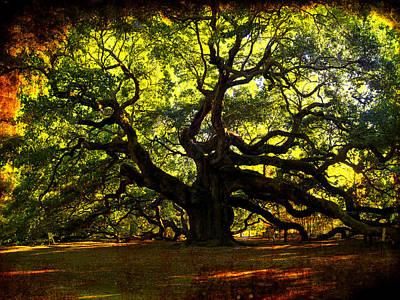 Old Old Angel Oak In Charleston Poster by Susanne Van Hulst
