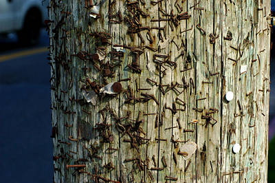 Old Telephone Pole With Staples  Poster by Micah May