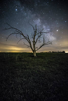 Old Tree  Poster by Aaron J Groen
