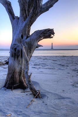 Old Tree And Morris Island Lighthouse Sunrise Poster