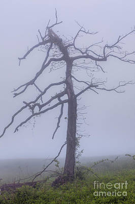 Old Tree In Fog In The Blue Ridge Poster