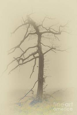 Old Tree In Fog In The Blue Ridge Fx Poster by Dan Carmichael