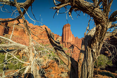 Old Trees At Fisher Towers Poster by Michael J Bauer