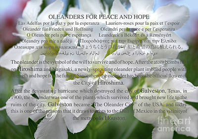 Oleanders For Peace And Hope Poster