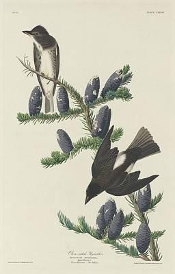 Olive-sided Flycatcher Poster
