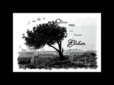 Olive Tree In House Of Elohim Poster by Gina Dittmer