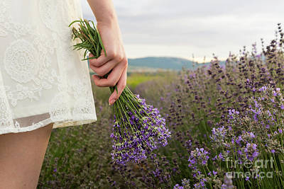 On Lavender Field Girl In White Dress Holding Bouquet Poster by Maria Kutinska