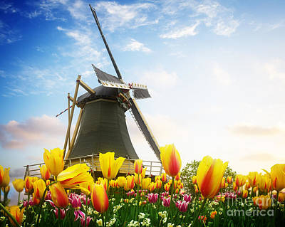 One Dutch Windmill Over  Tulips Poster
