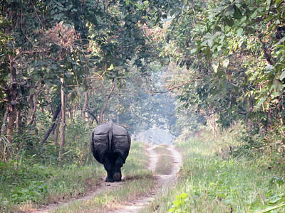 One Horned Rhino Walking Down The Road Poster by Clinton Weaver