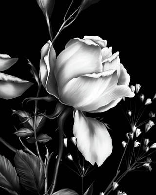 One Rose Bloom Black And White Poster by Georgiana Romanovna