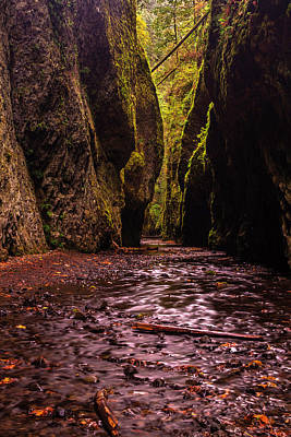 Oneonta Gorge In Fall Poster by Mark Kiver