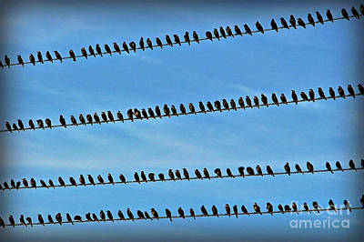 Online Birding Poster