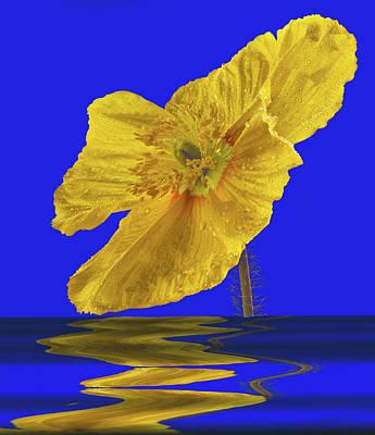 Open Iclandic Poppy Reflection Poster