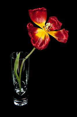 Open Red Tulip In Vase Poster