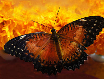 Orange And Black Butterfly Poster