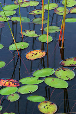 Poster featuring the photograph Orange And Green Water Lily Pads  by Juergen Roth