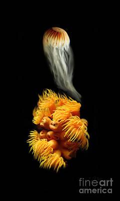 Orange Anemone Poster