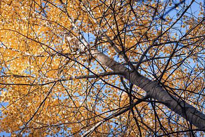 Orange Autumn Tree. Poster by Teemu Tretjakov