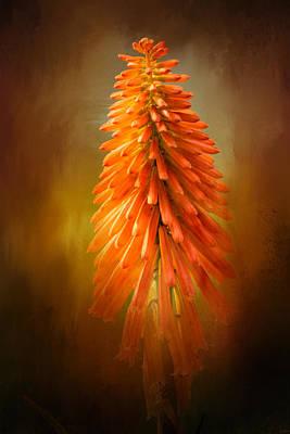 Orange Blast In The Garden Poster by Jai Johnson