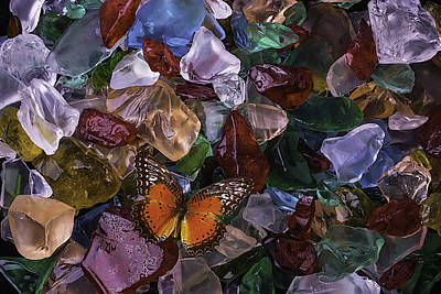 Orange Butterfly On Sea Glass Poster by Garry Gay