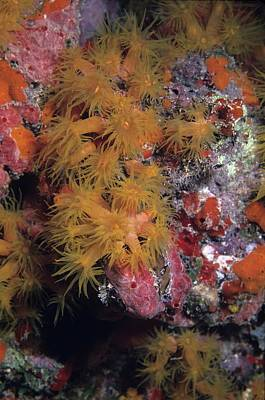 Orange Cup Coral And Sponges Poster