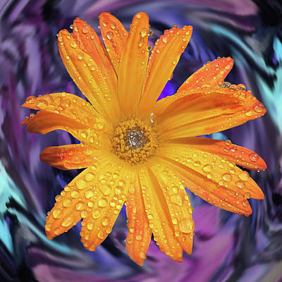 Orange Daisy Swirl Poster