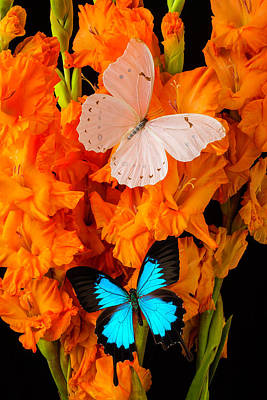 Orange Glads With Two Butterflies Poster by Garry Gay