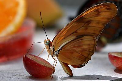 Orange Julia Butterfly Poster