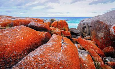 Orange Lichen Landscape Poster