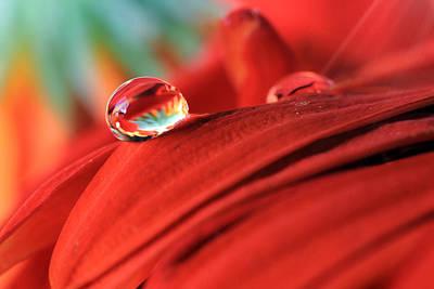 Orange Petals And Water Drops Poster