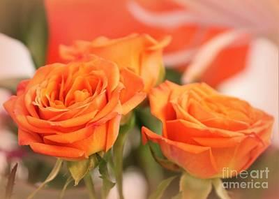 Orange Sherbet Roses Poster