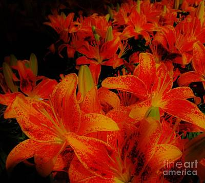 Spicey Tiger Lilies Poster