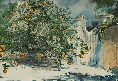 Orange Trees And Gate Poster by Winslow Homer