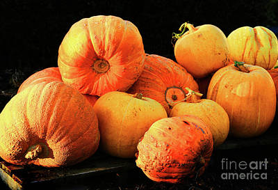 Orange Yellow Pumpkins Poster