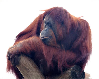 Poster featuring the photograph Orangutan - Color Version by Lana Trussell
