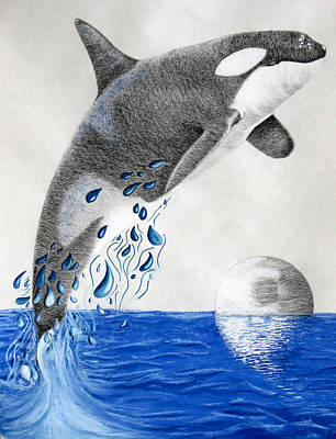 Poster featuring the drawing Orca by Mayhem Mediums