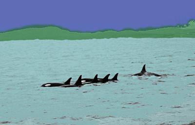 Orca Pod Poster by Al Bourassa