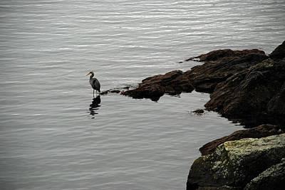 Orcas Island Bird  Poster