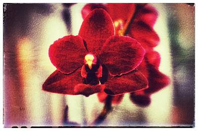 Poster featuring the photograph Orchid Alone by Isabella F Abbie Shores FRSA