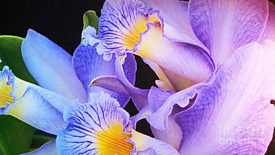 Orchid Bouquet Poster by Cindy Manero