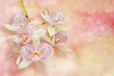 Orchid - Caulocattleya - The Twinkle In My Eye Poster