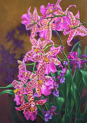 Orchid Fever 3 Miltonia Poster by Fiona Craig