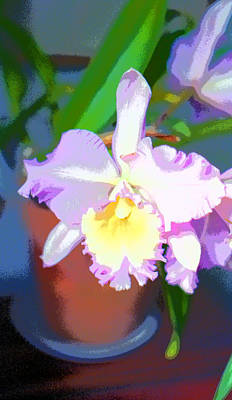 Orchid Image Poster by Paul Price