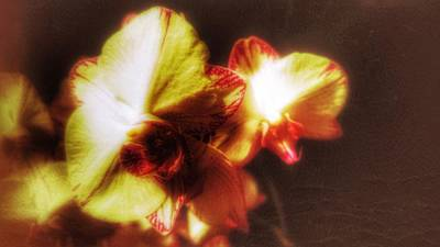 Poster featuring the photograph Orchid by Isabella F Abbie Shores FRSA