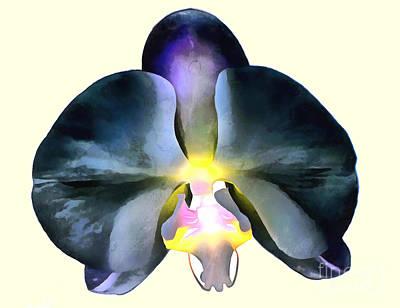 Orchid Of Splendor Poster by Krissy Katsimbras