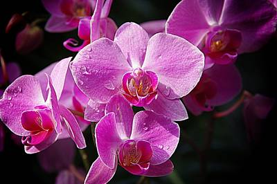 Orchids 4 Poster